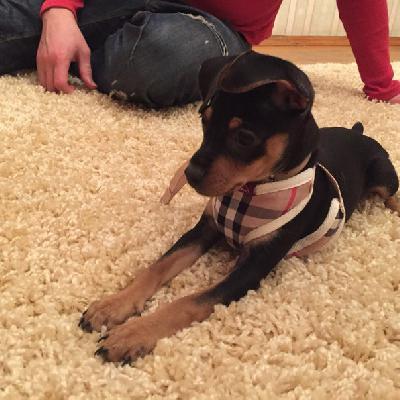 Транспортировка собак недорого из Москва в Волгоград