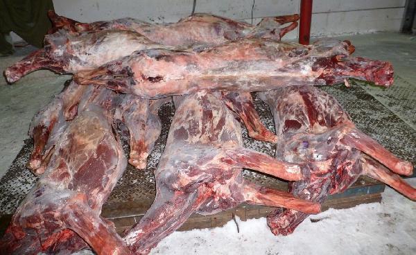 доставка мяса недорого догрузом из Тазовский в Новосибирск