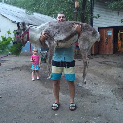 Аренда скотовоза для крупного рогатого скота из города Сургута в города Самара