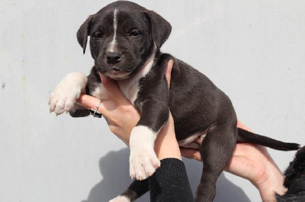 Перевезти собак недорого из Воронеж в Благовещенск