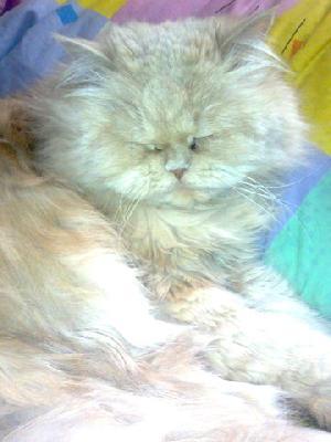 Доставка котика дешево из Оренбург в Москва