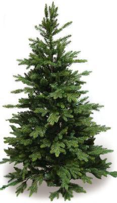 Перевезти елки недорого из Кургана в Омск