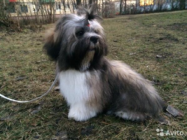 Отвезти собак автотранспортом из Санкт-Петербург в Москва