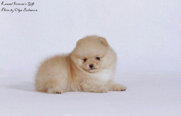Доставка собак дешево из Кострома в Тольятти