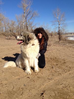 Транспортировка собак недорого из Волгоград в Барнаул