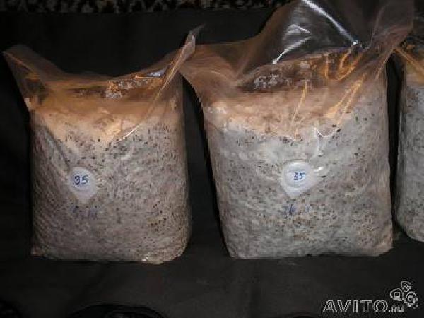 Перевозка личныx вещей : Мицелий грибов вешенки из Восхода в Владикавказ