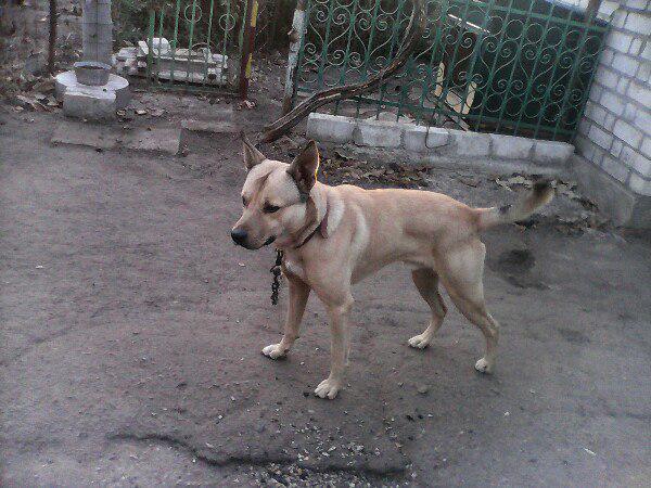 Транспортировка собак дешево из Украина, Николаев в Россия, Ростов-на-Дону