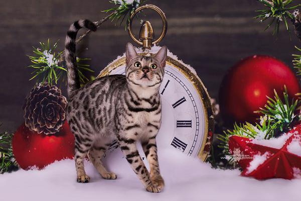Доставка Кошек дешево из Санкт-Петербург в Волгоград