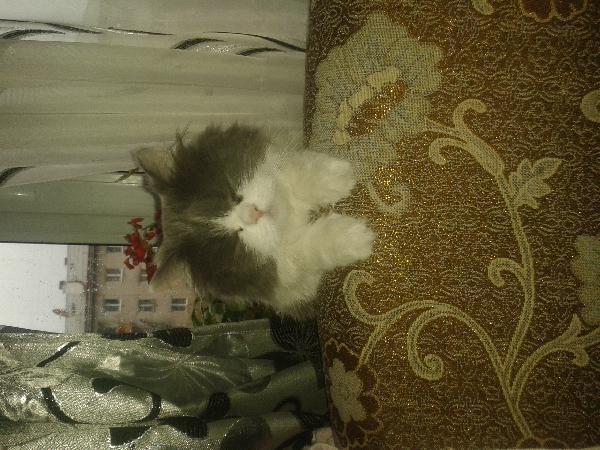 Доставка Кошек автотранспортом из Чита в Байкальск