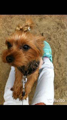 Сколько стоит отвезти собак недорого из Омск в Ростов-на-Дону