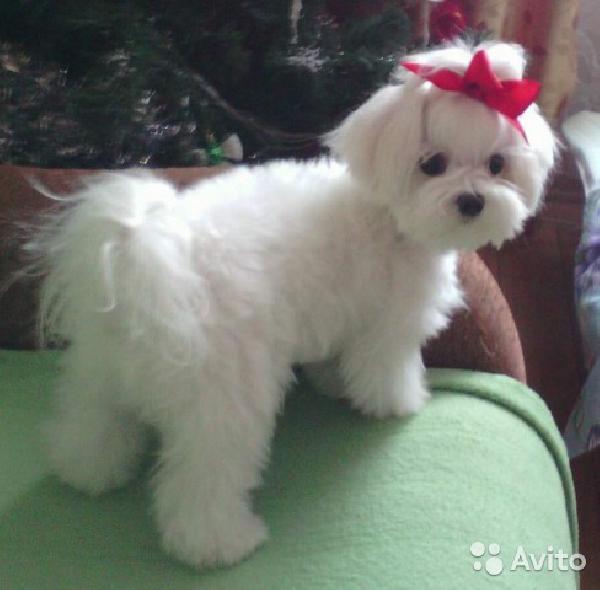 Услуги по доставке собак из Москва в Новороссиск