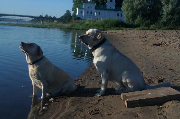 Сколько стоит доставка собак недорого из Санкт-Петербург в Псков