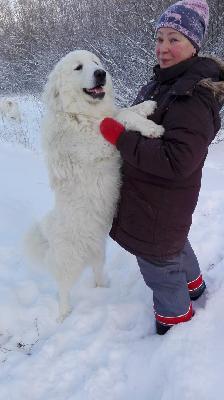Сколько стоит доставка собак недорого из СПБ в Москва