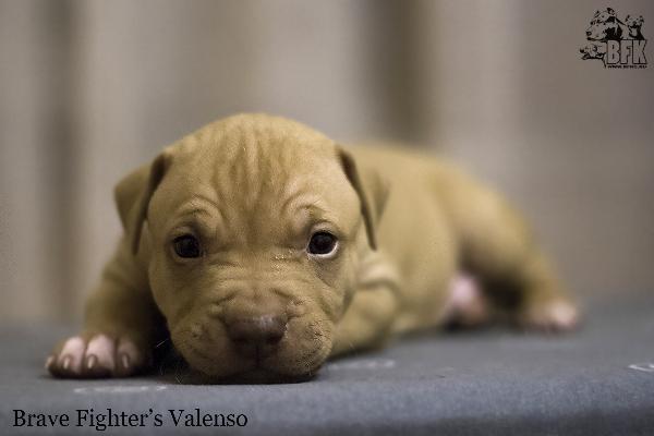Сколько стоит отвезти собак недорого из Люберцы в Старый Оскол