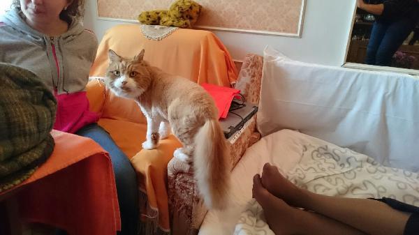 Транспортировать Кошек из Всеволожск в Тольятти