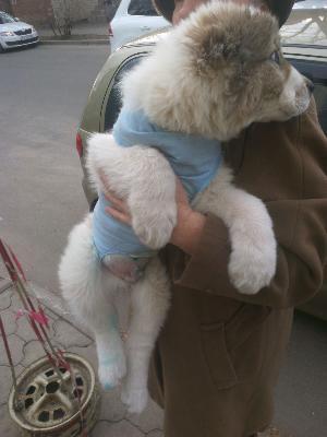 Доставить собак 1 дешево по Сочи
