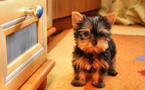 Сколько стоит перевозка собак недорого из Москва в Благовещенск