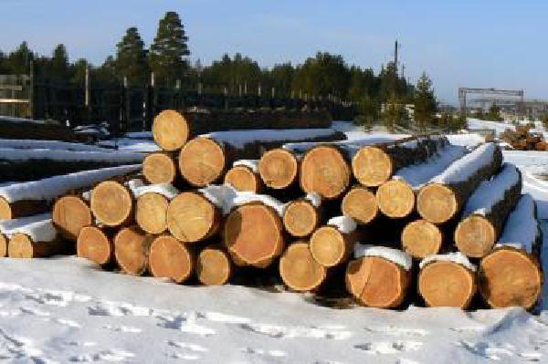 Перевозка Леса по ЖД из Ачинск в Новосибирск
