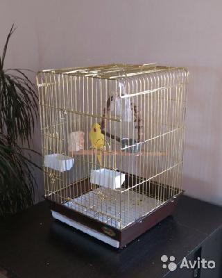 Транспортировка птиц одного попугая ожерелового из Вологда в Ростов-на-Дону