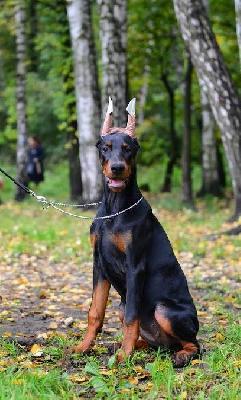 Доставить собак недорого из Россия, Краснодар в Соединенные Штаты, штат Джорджия.
