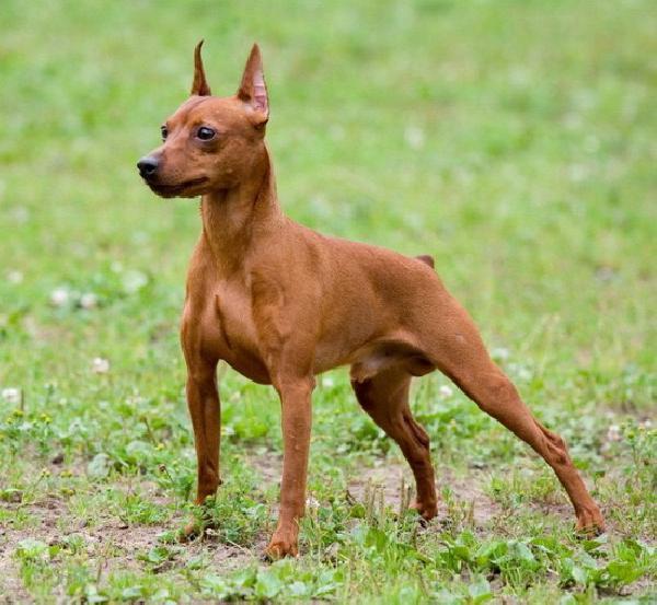 Доставить собак недорого из Комсомольск на Амуре в Владивосток