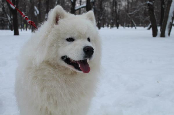 Сколько стоит доставка 1 собаки  недорого из Россия, Санкт-Петербург в Украина, Киев