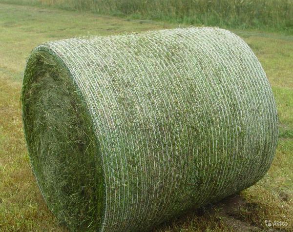 Заказ газели дешево из Гатчина в Сертолово
