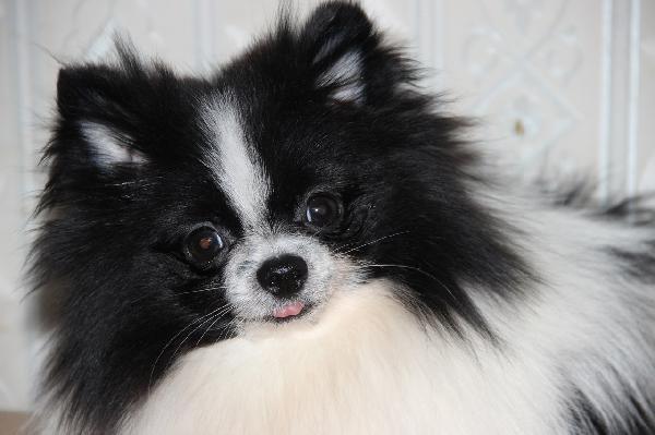 Отвезти собак автотранспортом из Магнитогорск в Березники
