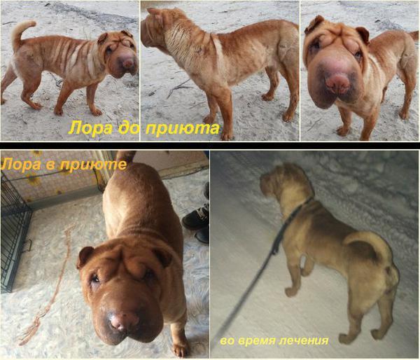 Перевезти собак автотранспортом из Ноябрьск в Ижевск
