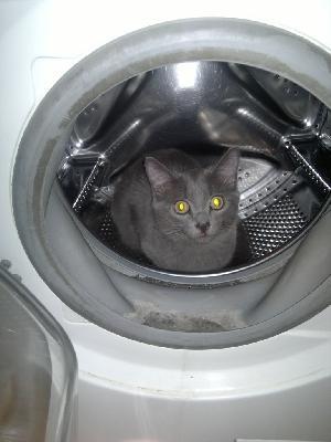 Сколько стоит транспортировка кота недорого из Новосибирск в Хабаровск