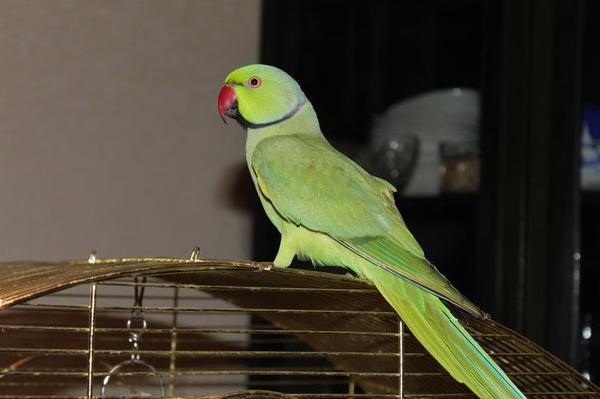 Сколько стоит транспортировать птиц недорого из Санкт-Петербург в Симферополь