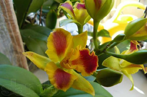 Заказать авто для отправки личныx вещей : цветущие орхидеи из Санкт-Петербурга в СНТ Черемушки