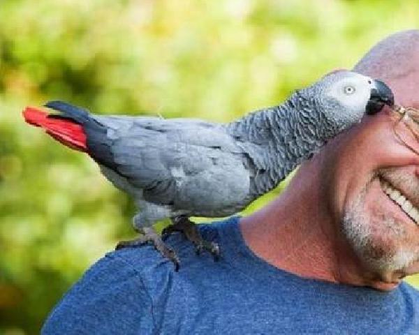 Перевезти попугая жако с клеткой из Москвы в Калининград