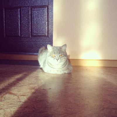 Сколько стоит транспортировка кота недорого из Стерлитамака в Москву