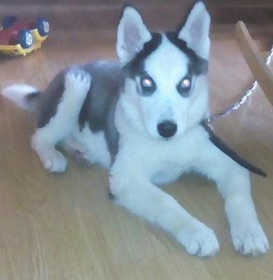 Перевезти собак дешево из Минеральные Воды в Челябинск