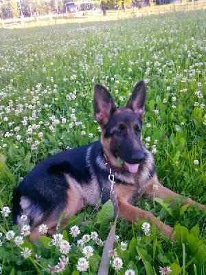 Услуги по доставке собак из Череповец в Сочи