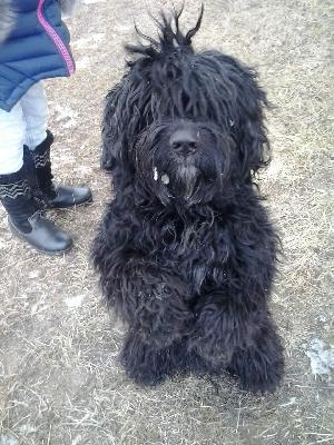 Отвезти собаку  дешево из Егорьевский район поселок городского типа Рязановка в Москва