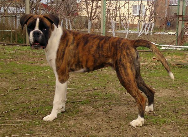 Доставить собак недорого из Россия, Краснодар в Литва, Вильнюс