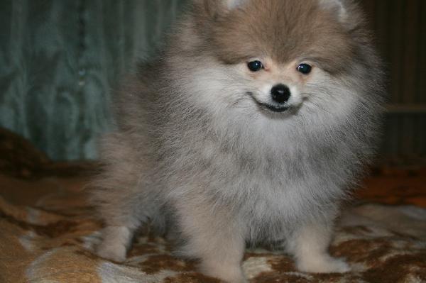 Перевезти собак дешево из Украина, Полтава в Россия, Санкт-Петербург