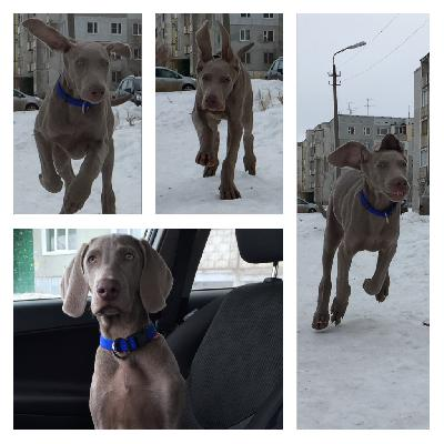 Услуги по доставке собак из Братск в Красноярск