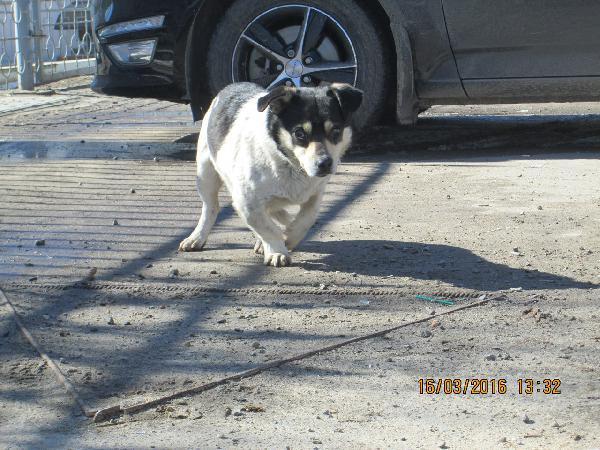Отвезти собак из Волгоград в Санкт-Петербург