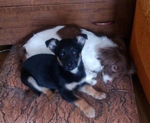 Доставка собак автотранспортом из Ижевск в Камбарка