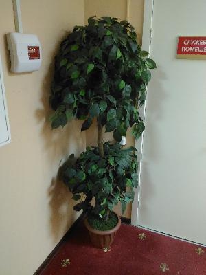 перевозка искуственных дерев цена попутно из Уфа в Пермь