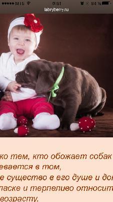 Доставить собак из Рязань в Сочи