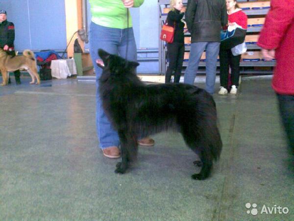 Доставка собак дешево из Пермь в Москва