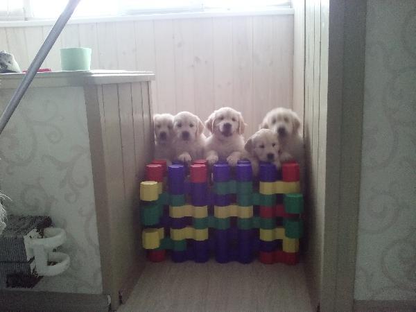 Транспортировать собак дешево из Тольятти в Адлер