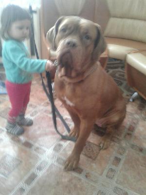 Доставить собак недорого из Екатеринбург (Камышлов) в Москва