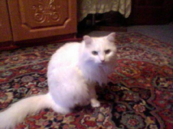 Перевозка кота из Красноярск в Глазов