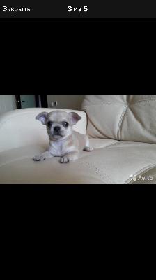 Перевезти щенка из Москва в Чита