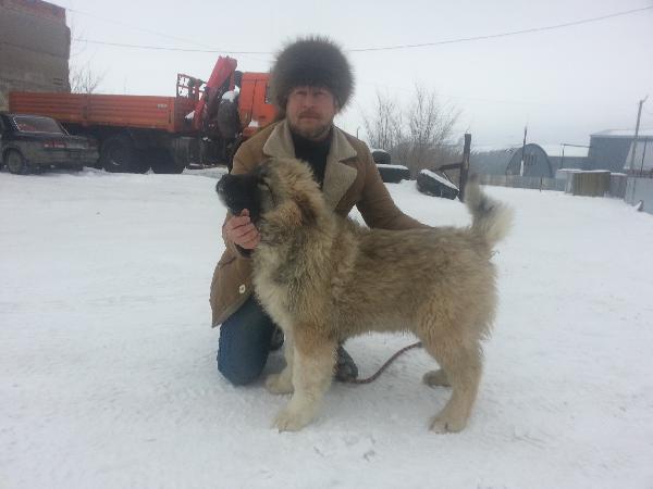 Отвезти собак дешево из Бузулук в Симферополь